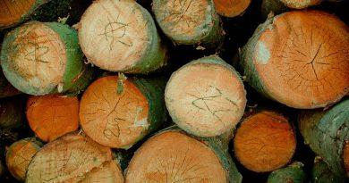 meble z drewna